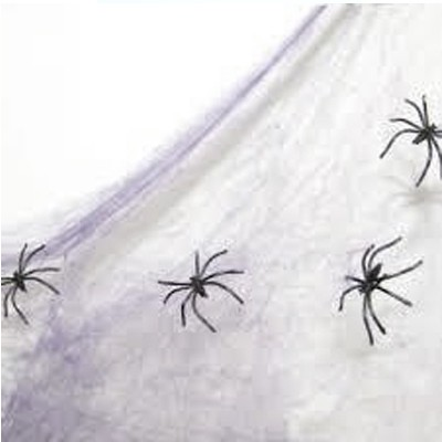 קורי עכביש להלוואין