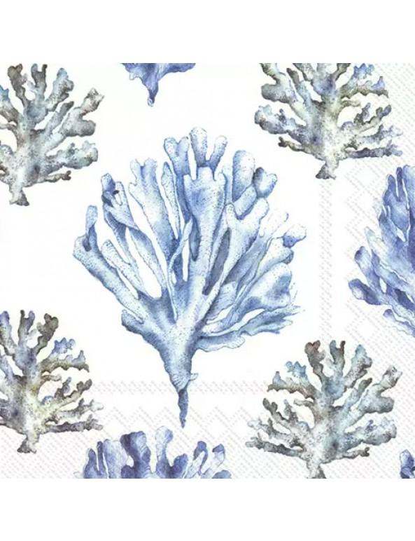 מפיות אלמוגים- לבן